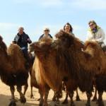 Тур в пустыне Кызыл Кум
